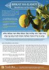 Birkat ha-Ilanot : bénédiction sur les arbres